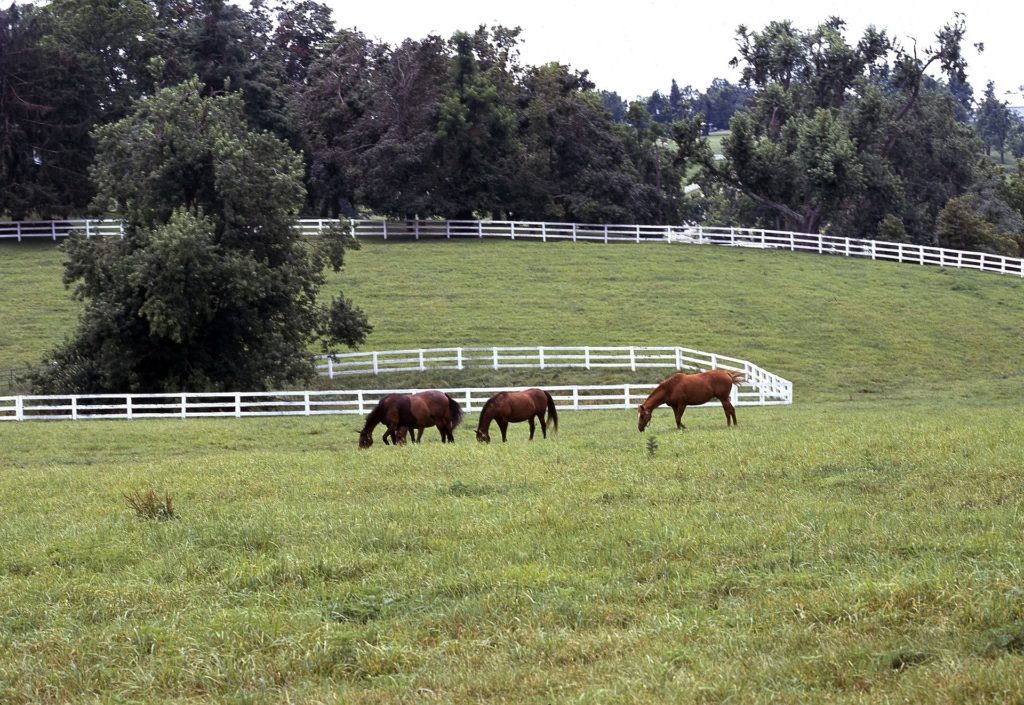 image of kentucky horse farm